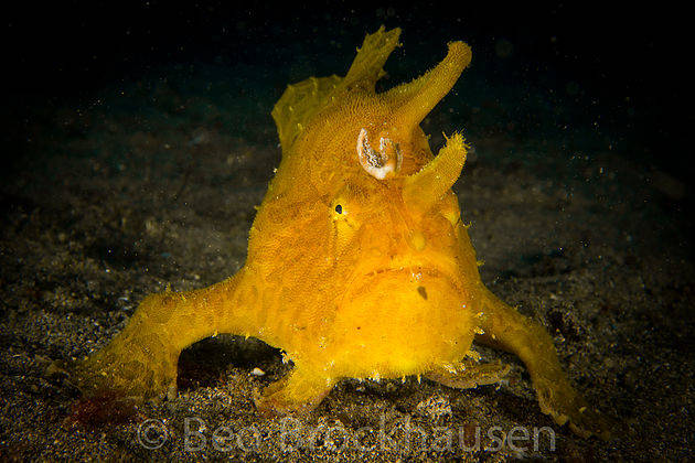 Sao Vicente- Frog Fish capital of the Atlantic
