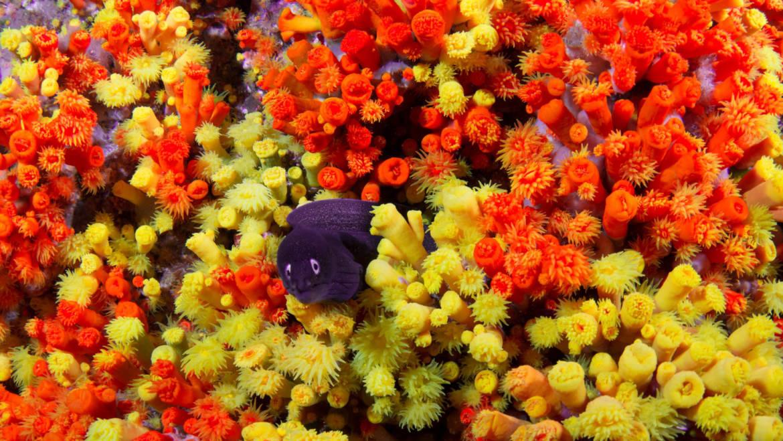 Witness Cape Verde's biodiversity!