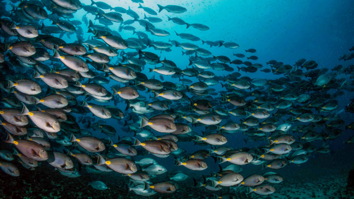 Come and enjoy the sunny and colorful underwater world of Cape Verde